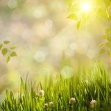 Bright summer. Royalty Free Stock Photography