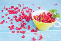 Bright summer colors. Red currant in a bright yellow cup on a blue wood background stock photography