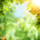 Bright summer day in the forest Royalty Free Stock Photos