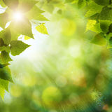 Bright summer day in the forest Stock Photos