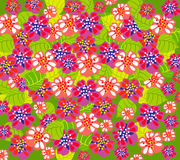 Bright summer floral backgrond Royalty Free Stock Photography
