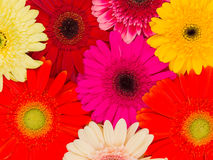 Bright summer flowers Royalty Free Stock Photos