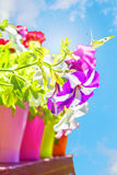Bright summer flowers in colorful flowerpots backlit Royalty Free Stock Photos