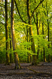 Bright summer forest. With light shining on the leaves Stock Photo