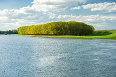 Bright summer forest and river. Stock Images