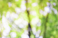 Bright summer green bokeh background Royalty Free Stock Photography
