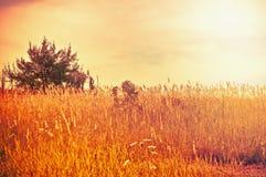 Bright summer landscape Stock Photos