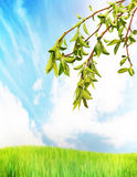 Bright summer landscape and branches with green leaves Royalty Free Stock Images