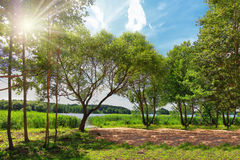 Bright summer landscape of green nature on lake on sunny day. Bright rays of sun through green leaves of trees Stock Photos