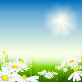 Bright summer meadow Royalty Free Stock Photos