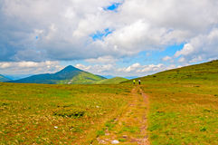 Bright summer morning in the Carpathian mountains. Royalty Free Stock Photo