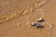 Three small sea shells are on the wet yellow sand stock photos