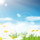 Bright summer vector background Stock Photography