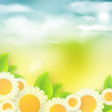 Bright summer vector background Stock Images