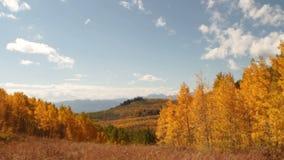 Bright sun aspen trees and grassy field. Video of bright sun aspen trees and grassy field stock footage
