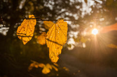 Bright sun in autumn forest Stock Image