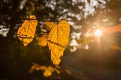 Bright sun in autumn forest. Yellow smog autumn sunset under Budapest city Stock Image