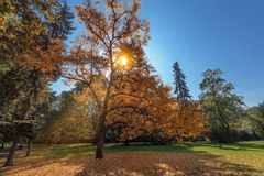 Bright sun beams piercing through colorful leaves of the tree. stock photography