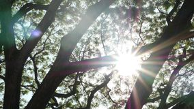 Bright sun behind tree branches. Beams of bright sun shining through leaves and branches of trees. Bright sun behind tree branches. Beams of bright sun shining stock video