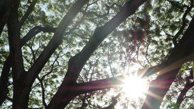 Bright sun behind tree branches. Beams of bright sun shining through leaves and branches of trees. Bright sun behind tree branches. Beams of bright sun shining stock video footage