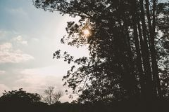 Bright sun behind trees. With a blue sky and some clouds royalty free stock photo