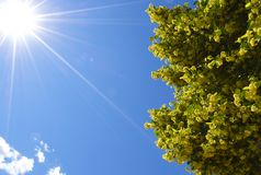 Bright sun with a flowering tree Royalty Free Stock Photos