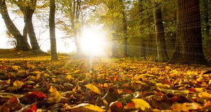 Bright sun in forest royalty free stock photos
