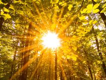 Bright sun in forest. On a autumn day Royalty Free Stock Photo