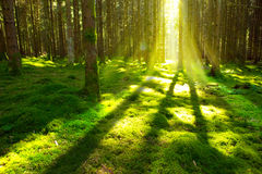Bright sun in the forest  . Stock Photos