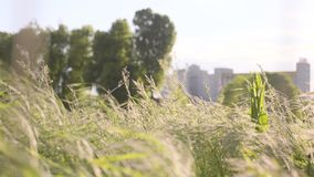 Green Grass Field. Bright sun and green grass field in the countryside. W stock video
