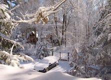 The bright sun illuminates the snow covered trees Stock Image