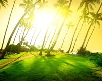 Bright sun over field Stock Photography