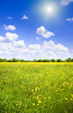 Bright sun over flower meadow. Stock Photos