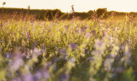 Bright sun over flowers field Stock Image