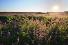 Bright sun over flowers field Royalty Free Stock Photos
