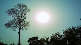 Bright sun over a tropical forest stock video footage