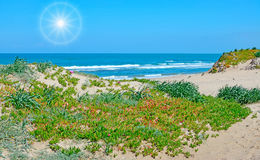 Bright sun in Platamona Royalty Free Stock Image
