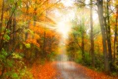 Bright sun rays Stock Photos