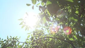 Bright Sun Rays and Foliage. The bright sun rays shining through branches of trees and fresh leaves in a forest wood landscape.Natural green background with stock footage