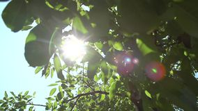 Bright Sun Rays and Foliage. The bright sun rays shining through branches of trees and fresh leaves in a forest wood landscape.Natural green background with stock video