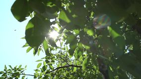Bright sun rays and foliage. The bright sun rays shining through branches of trees and fresh leaves in a forest wood landscape.Natural green background with stock video footage
