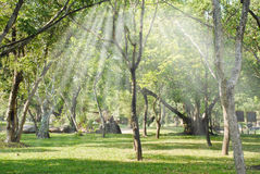 The bright sun rays shining through branches of trees Stock Photos