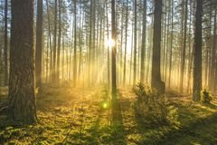 Bright sun rays through trees in green spring forest. Landscape of forest in early morning. Natural nature. Scenery woodland with sunshine. View on green royalty free stock photos