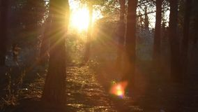 Bright sun shines through tree foliage in slow motion stock footage