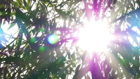 Bright Sun Shines Through Tree Foliage. Sun Shining Through The Branches And Leaves Of Trees In A Forest stock video