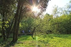Bright sun shining through the green foliage of trees in the Park in summer. Bright sun shining through the green foliage of trees in the Park on a spring day stock images