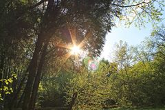 Bright sun shining through the green foliage of trees in the Park in summer. Bright sun shining through the green foliage of trees in the Park on a spring day stock photo