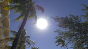 Bright sun shining over summer resort in Mauritius. Tilt shot of tropical resort area with bright sun shining in the sky, wind swinging palm trees. Summer stock video