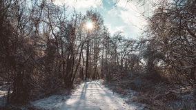 Bright Sun Shining on Snowy Trail in Bare Forest Stock Photo
