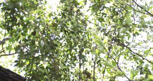 Bright sun shine rays through tree branches panning down to branches blowing in the breeze 4k footage clip